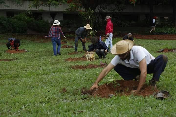GT de Agricultura Urbana promove ações em parceria com a Virada do Cerrado